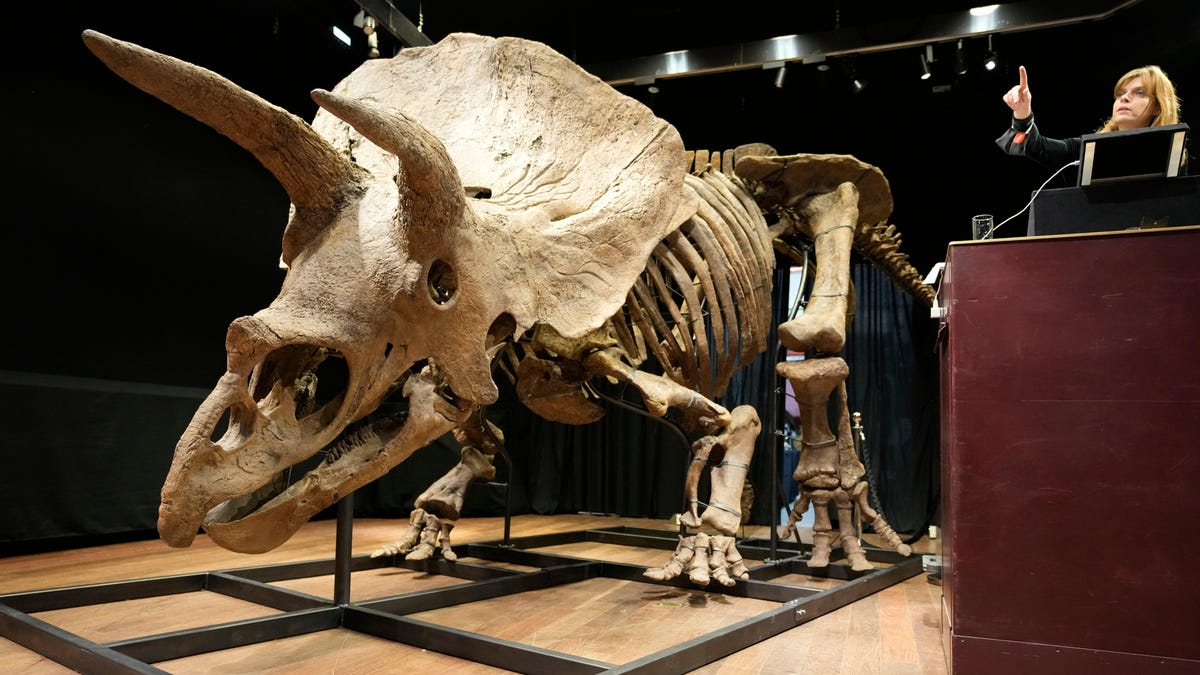 RT @Gizmodo: Largest Triceratops Skeleton Ever Found Sells for $7.7 Million at Auction