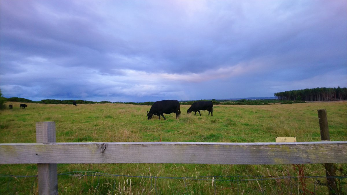An overall low fluke risk due to dry weather this year could lead to some farmers being caught out, particularly where animals have relied on running water sources at pasture, SCOPS has warned. More information here: scops.org.uk/news/13490/flu…