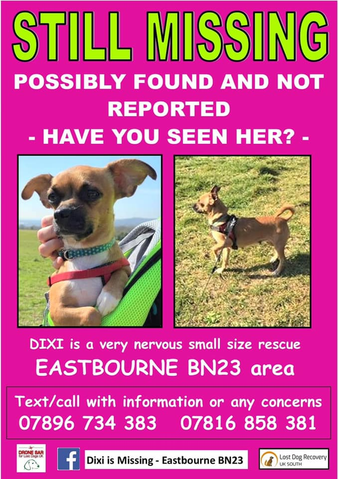 🆘DIXI IS STILL MISSING🆘 She is a very scared rescue #dog who escaped on arrival at her new adopter's home in #Eastbourne #BN23 area, #EastSussex on 13/4/21. She deserved so much better. Has anyone seen her? Did someone take her in? facebook.com/diximissingeas… #MissingDog