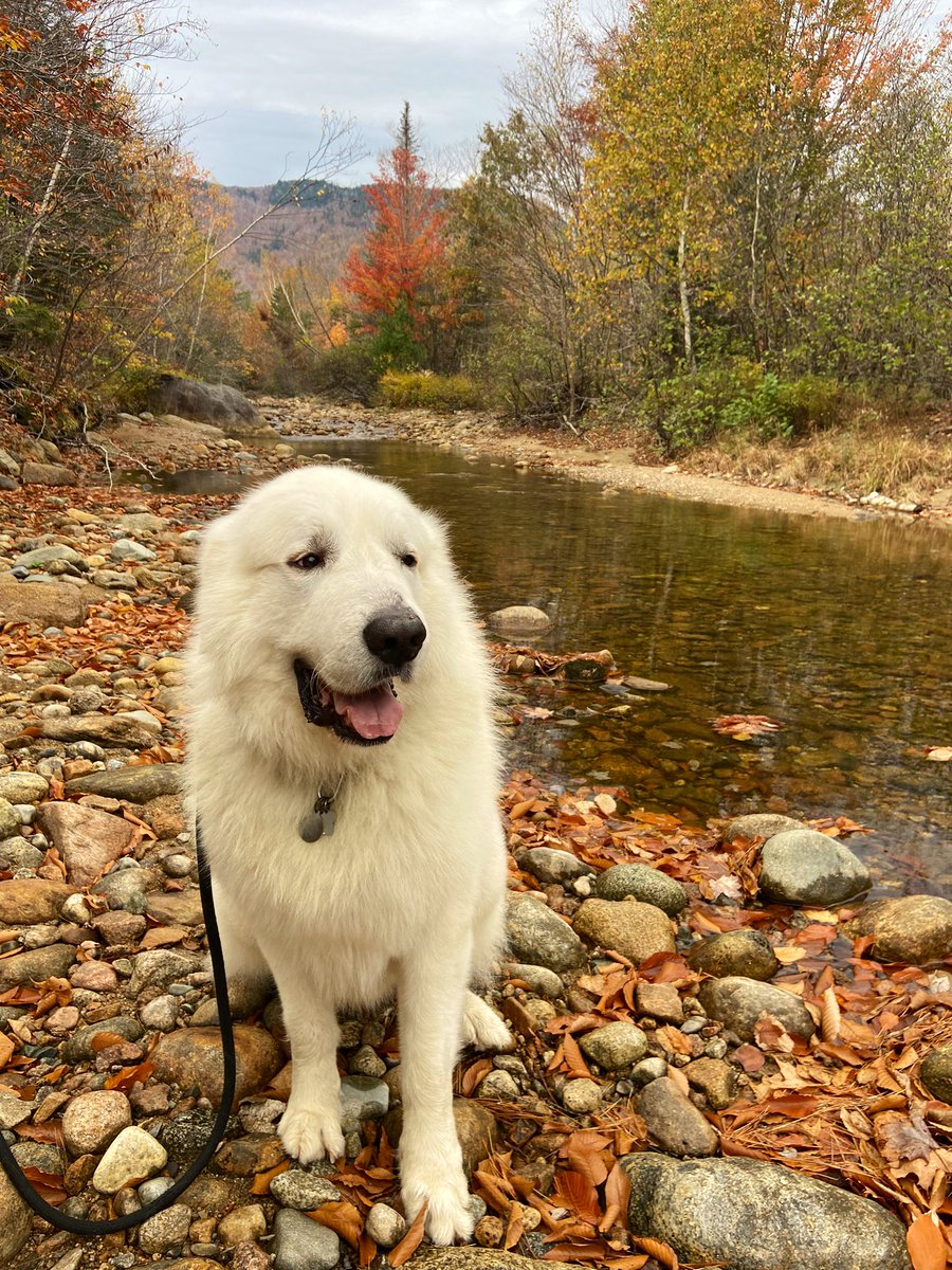 Hitting the reset button - the only way I know how. #whitemountains #dogsarebetterthanpeople https://t.co/FUekFYU5Cn