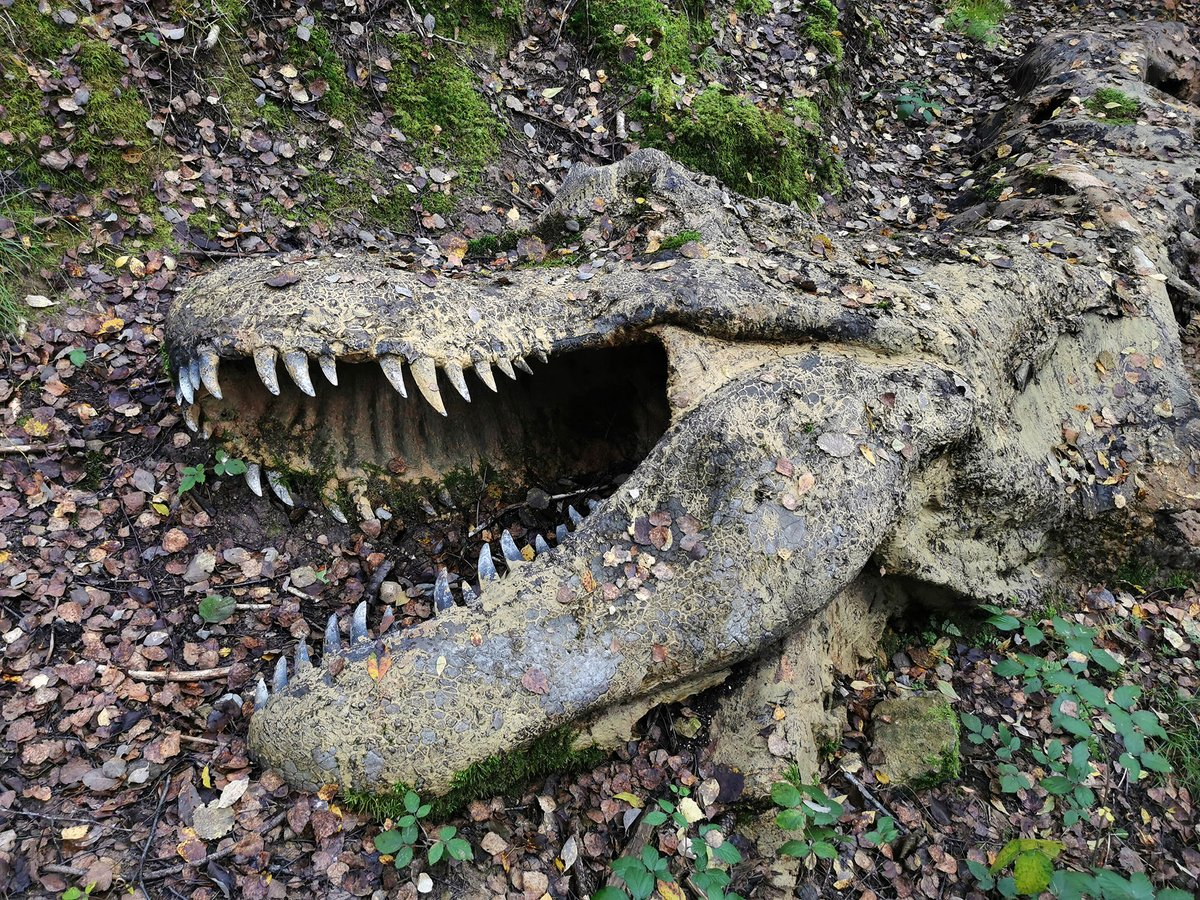 Happy #FossilFriday! I Encountered a decomposing adult T. rex in a Bavarian forest the other day - including an easily missed 'Easter egg' (a dromeosaurid?). Wonderful to see a display like this; the autumn mood & litter made it even better! (DinoMuseum Altmühltal)