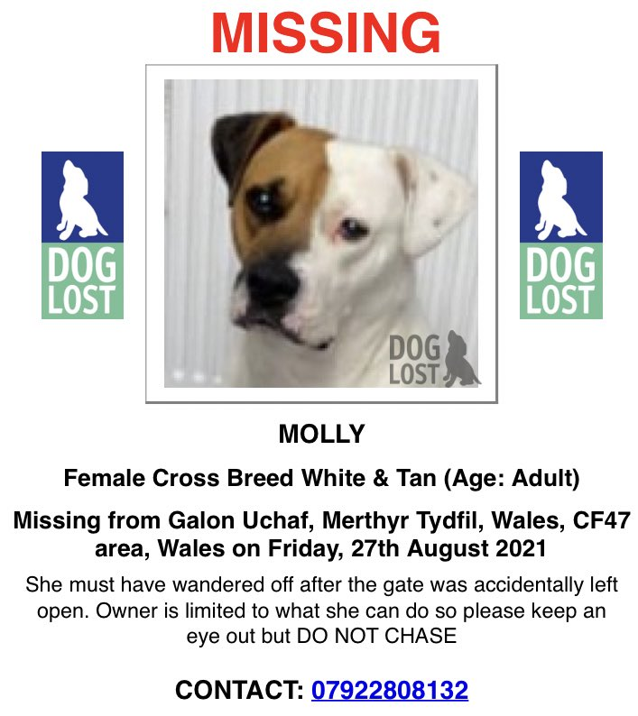 MOLLY IS STILL MISSING from Galon Uchaf, #MerthyrTydfil #Wales on the 27th August 2021 Information confirms now considered STOLEN CONTACT: 07922808132 Or Police on 101 DogLost doglost.co.uk/dog-blog.php?d… Facebook facebook.com/groups/2193589… #PetAbduction #PetTheftReform #FernsLaw