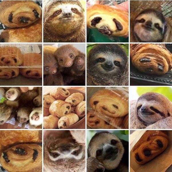 "Bit of Friday Fun! ""Sloth, or Pain Au Chocolat?!"" 😉 🦥  @theratdownsouth"