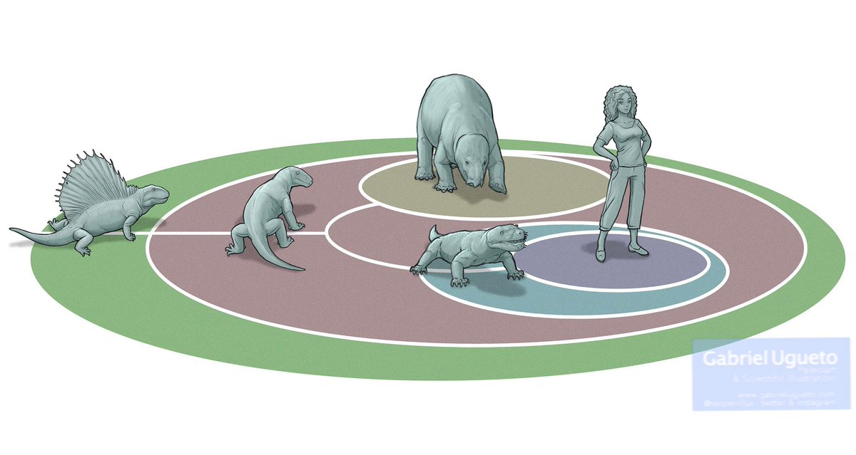 For the Lisowicia book, number 4 of the Extinct series, we wanted to show the reader how we mammals are related to Lisowicia and other synapsids. It was important for us that the reader understood, in a visual way, that once you are in a group, you never leave the group.
