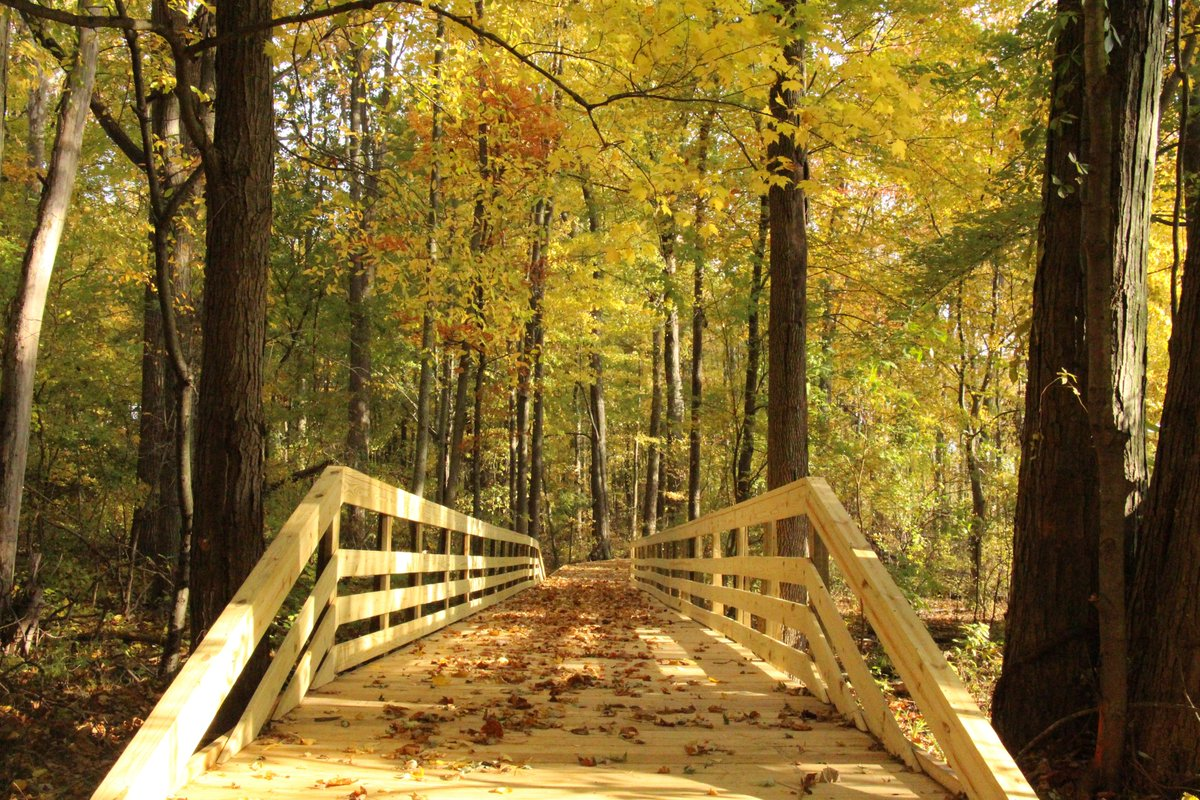 Fall Foliage Fun Walk 10/27; 1 - 2:30 pm Bradner Preserve  Enjoy a stroll & learn about the fall season and leaves. Please register for this free, naturalist-led program: …servations.woodcountyparkdistrict.org/programs/index…  #autumn #hike #Ohio  #nature #outdoors #WoodCounty #thingstodo #fallcolors
