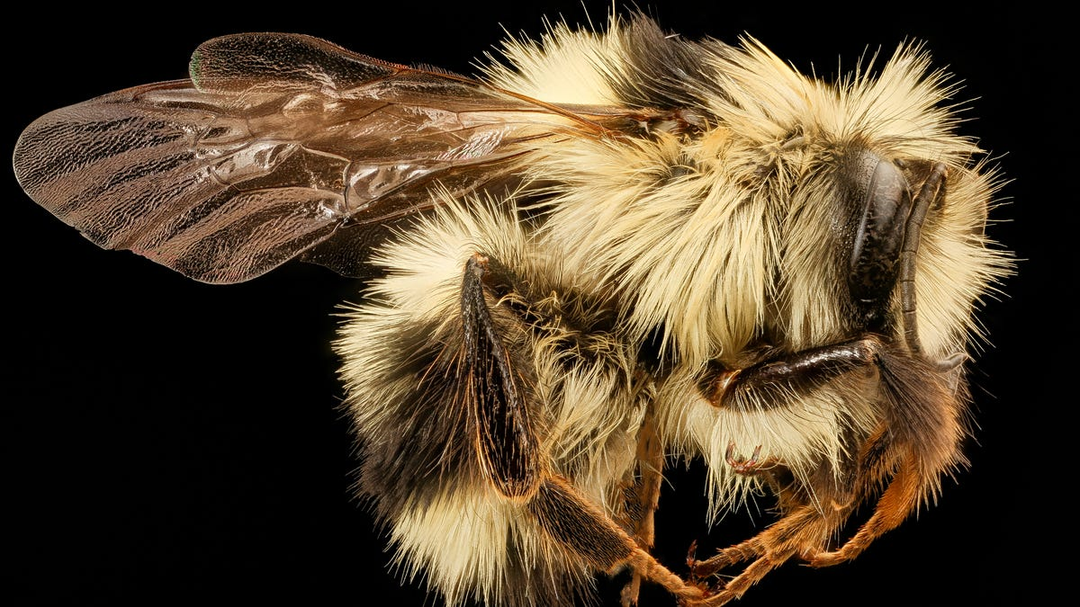 RT @Gizmodo: The Genetics Behind Bees' Black and Yellow Butts