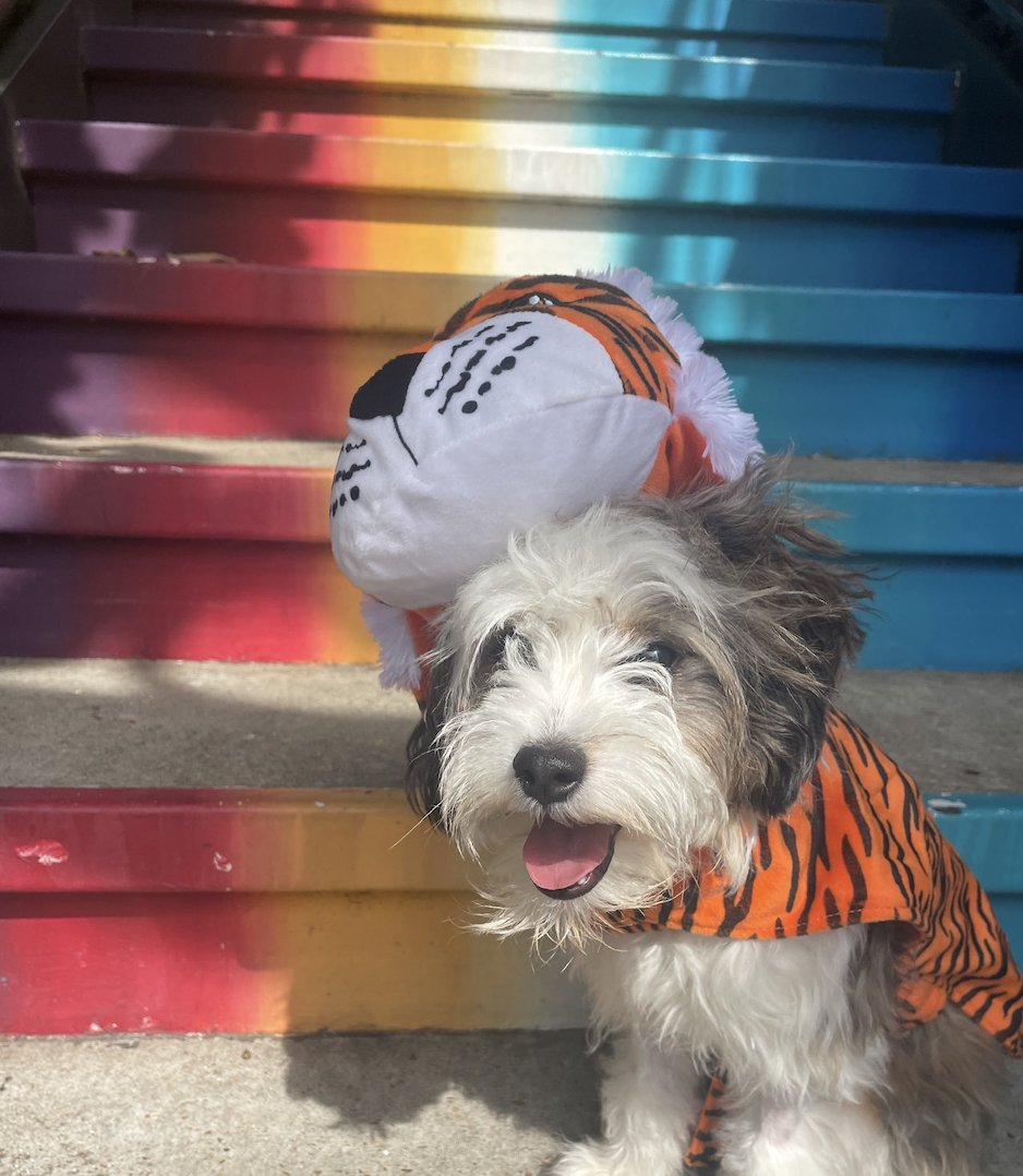 We are HOWLING with excitement about tonight's dog bingo hosted by @cerritolive! Bring your furry friend and they will get their own bingo card, plus there will be a dog costume contest. The fun starts at 7:30 PM. 🐶🎃