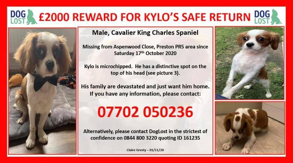 ❤️🔥KYLO MISSING ONE YEAR❤️🔥 £2000 reward / finders fee has been offered for his safe return 17/10/20 was the last time he was seen by his family Pear Tree Estate, #PRESTON #PR5 NORTH WEST missing from home when the gate was accidentally left open 😪 doglost.co.uk/dog-blog.php?d…