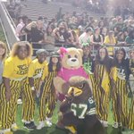 Image for the Tweet beginning: Fiest Bear cheering on Cy-Falls