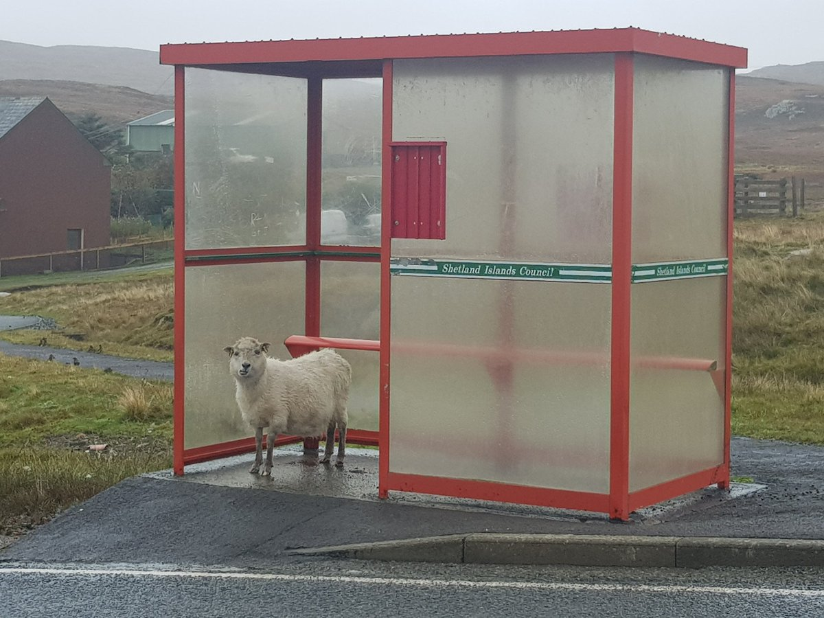 Bus Stop Of The Day: Shetland. (2021) Pic: Barry Reed.