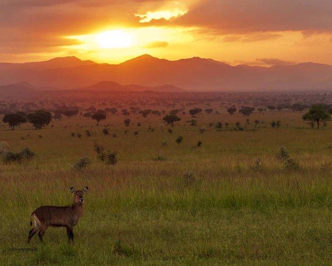 This is Uganda.   #VisitUganda