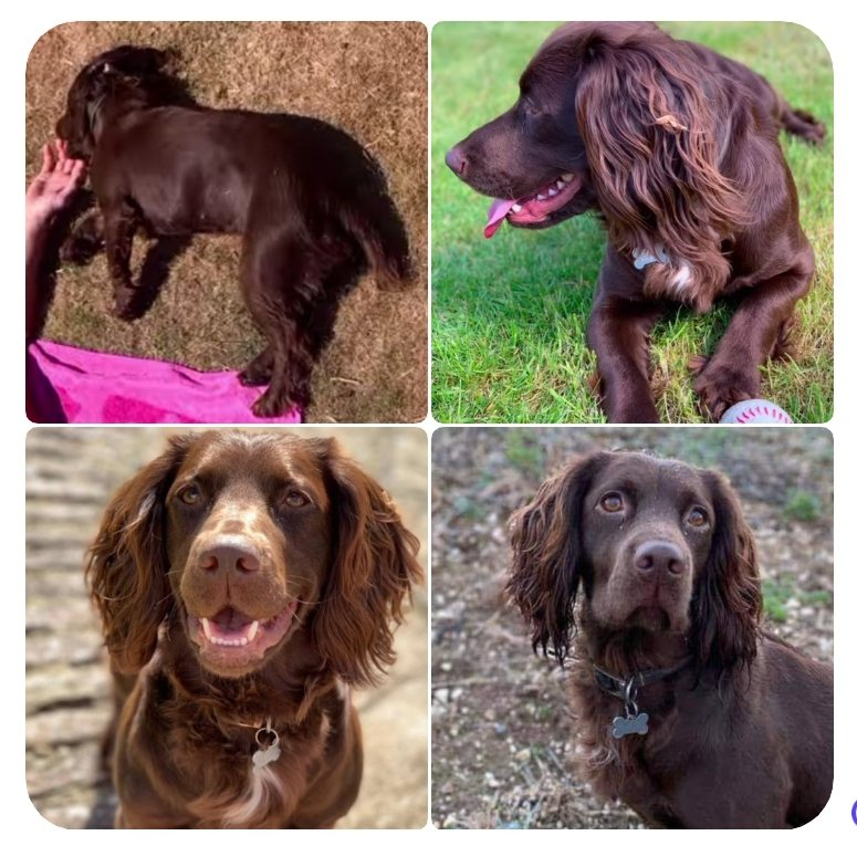 Bramble is still missing, Police enquiries arenongoing ad Bramble is listed as stolen. #findbramble #bringbramblehome #petabduction twitter.com/MissingBramble…