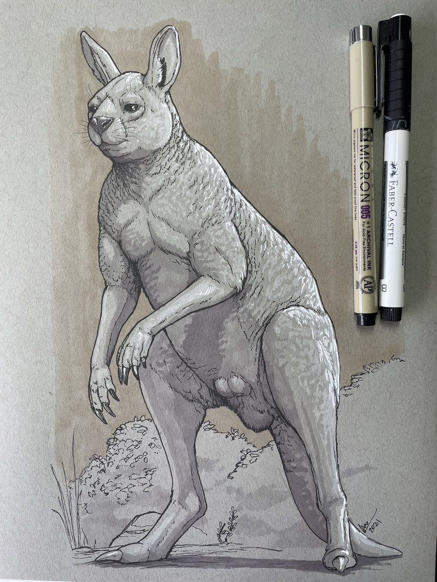 October ink and marker sketches 7: A big adult male Procoptodon goliah, a giant, short-faced,one-toed kangaroo from the late Pleistocene of Australia. They probably did not hop but walked.