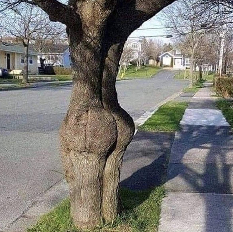 Her der vist tale om et meget frækt træ 🌲