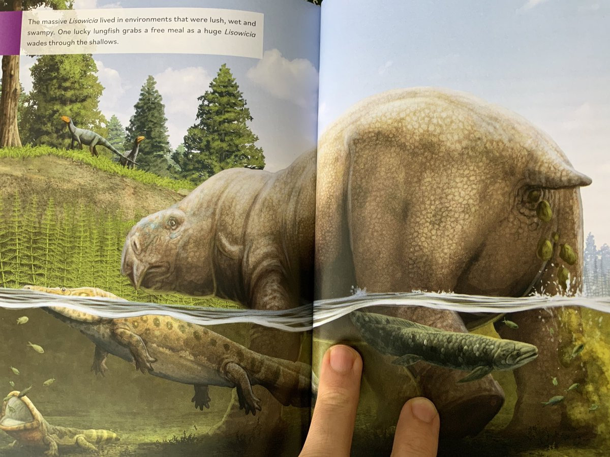 This is one of the many illustrations I did for book 4 (Lisowicia) of the extinct series written by @ben_garrod and which is now available!   I had a very short window of time to work on over 25 illustrations (a bit over a month!🤯) for this book but I am happy with the results.
