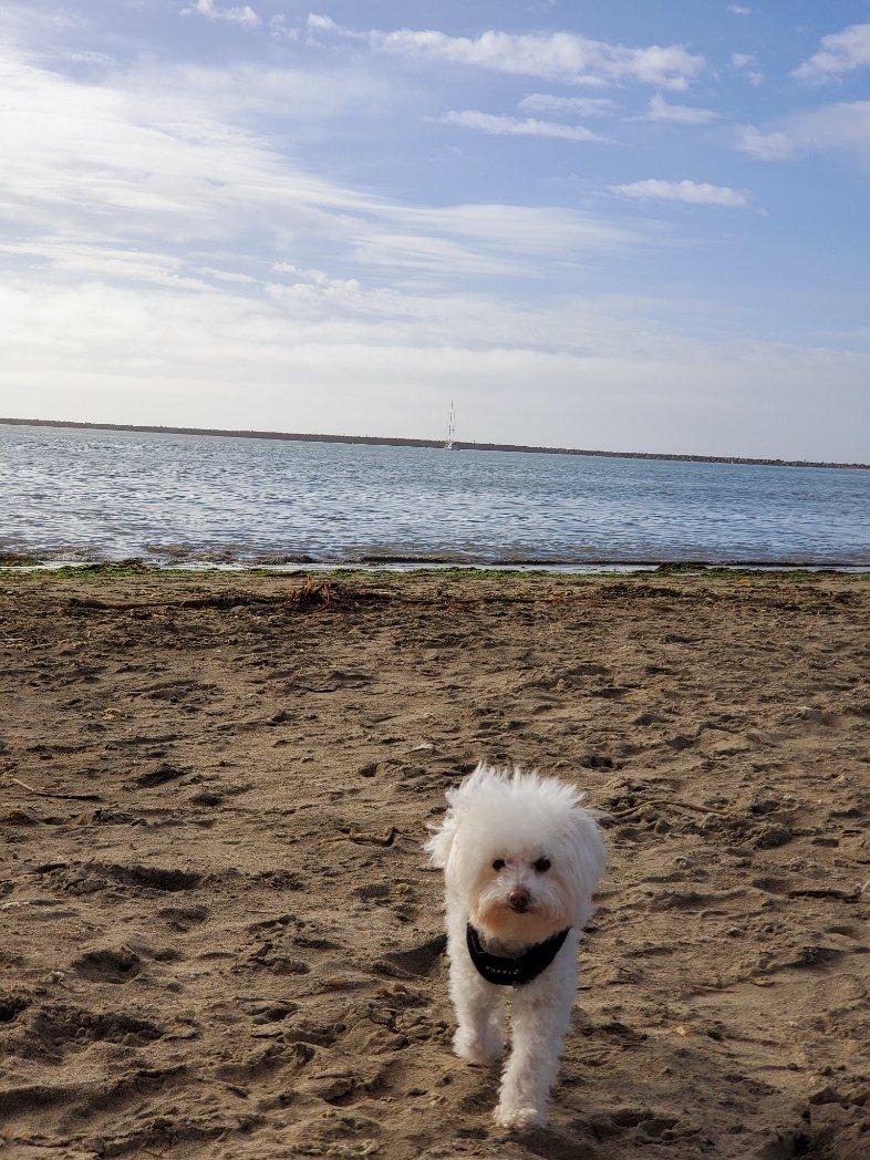 RT @lesleyholmes415: She got her wish #dogonthebeach #dogsoftwitter #Californialiving #itsadogslife https://t.co/h0Bfcr5YT3