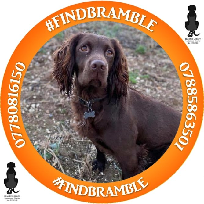 Join us on Sunday 24th October between 8 and 9 pm for a #twitterstorm and help flood all platforms of social media, sharing retweeting and posting pictures posters and appeals for #findbramble facebook.com/events/s/bring…