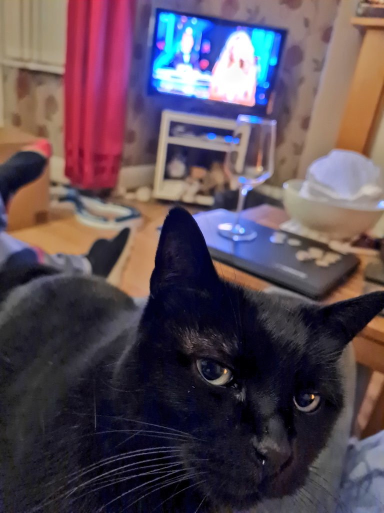 """""""You're voting for that couple, really?""""  #AlanContent #Caturday"""