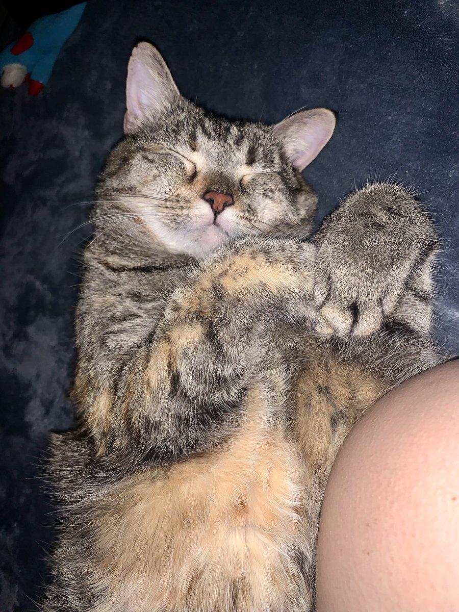 ✨Korra✨ #Caturday #CatsOfTwitter