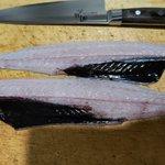 知らなかった!深海魚の喉~お腹にかけて黒い膜がある場合が多い!