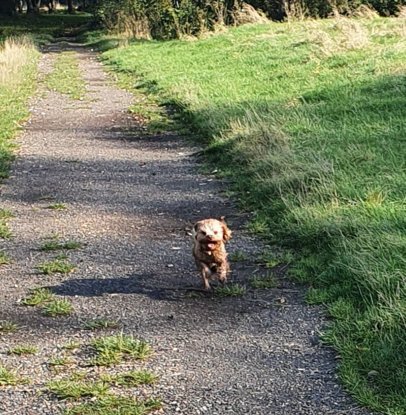 The picture of pure joy. #itsadogslife. #edutwitter https://t.co/Xb8PjR00Ft