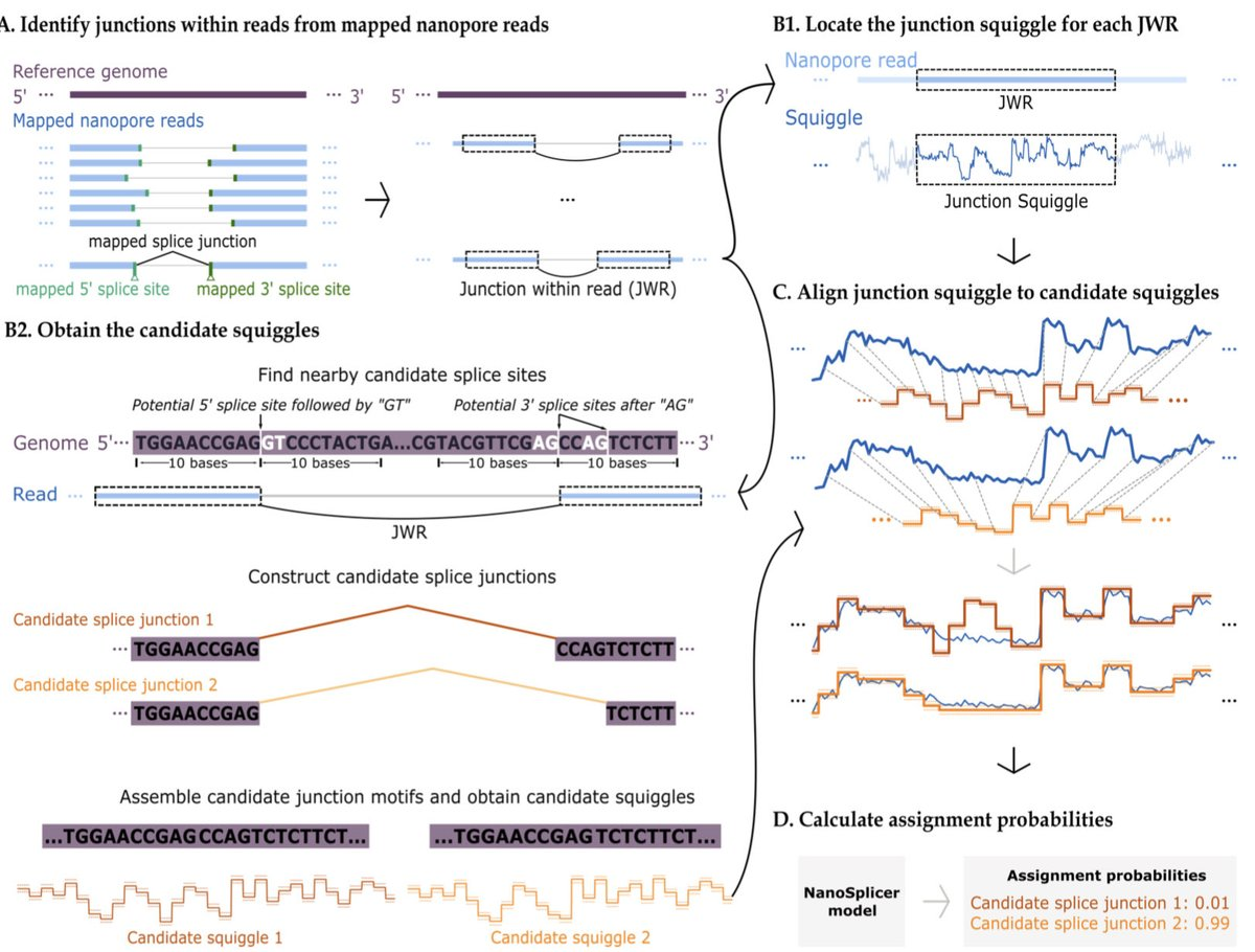 Alternative splicing is a mechanism where I think a lot of biological complexity remains hidden & limited by technology (short reads). Great to see LRS is already starting to shed some light on it and methods around it are already emerging!