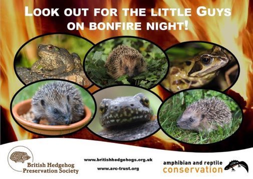 Look out for the little guys on #BonfireNight! Help hedgehogs, reptiles and amphibians: 🔥 Don't build bonfires too far in advance 🔥 Check carefully before lighting 🔥 Light from one side to allow wildlife an escape route 🔥 Share this image from @hedgehogsociety and @ARC_Bytes