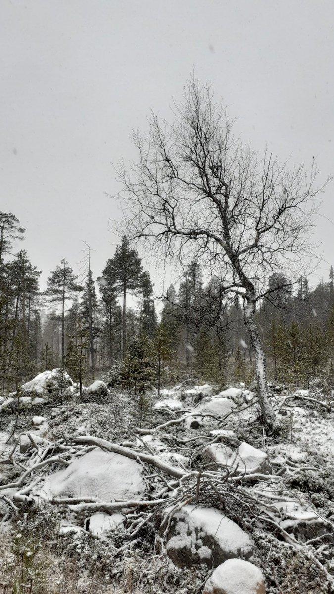 MarjahVilkman photo