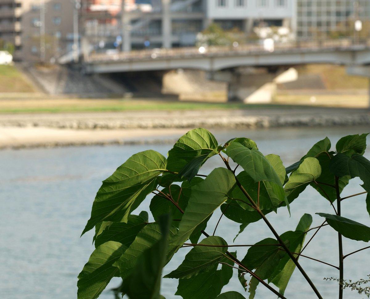 #写真好きな人と繋がりたい #写真撮ってる人と繋がりたい #Photography #photo #nature  #自然 #植物 #葉 #橋 #街  #光  葉っぱ☘️