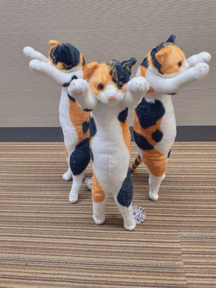 弊社の猫コラぬいぐるみ🐈 #JO1 の #與那城奨 さんにご紹介いただいてたようです‼️ありがとうございます‼️🙇♂️  キディランド原宿店様(@h_kiddyland )とキディランド大阪梅田店様(@u_kiddyland )でお取扱ございます。 全国のゲームセンター様でのお取扱もございます🙋♀️お迎えしてください🐈   #よなじろう