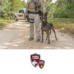 Image for the Tweet beginning: K9 Asha is up and