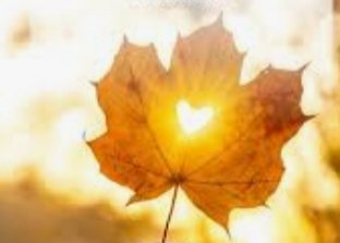 Fall is proof that CHANGE is beautiful.  #AutumnFalls  #beautiful
