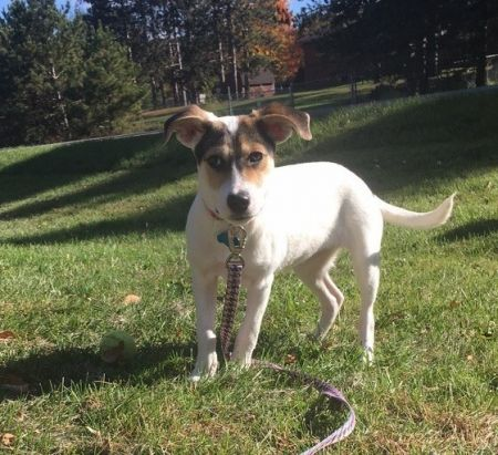 Sylvia is a pretty pup, who can be found near Minneapolis, MN! Sylvia is a Shepherd mix, who enjoys long walks on the beach. #Shepherd #mixedbreed #mutt #dogsoftwitter #rescue #adopt #dog #Minneapolis #Minnesota #MN