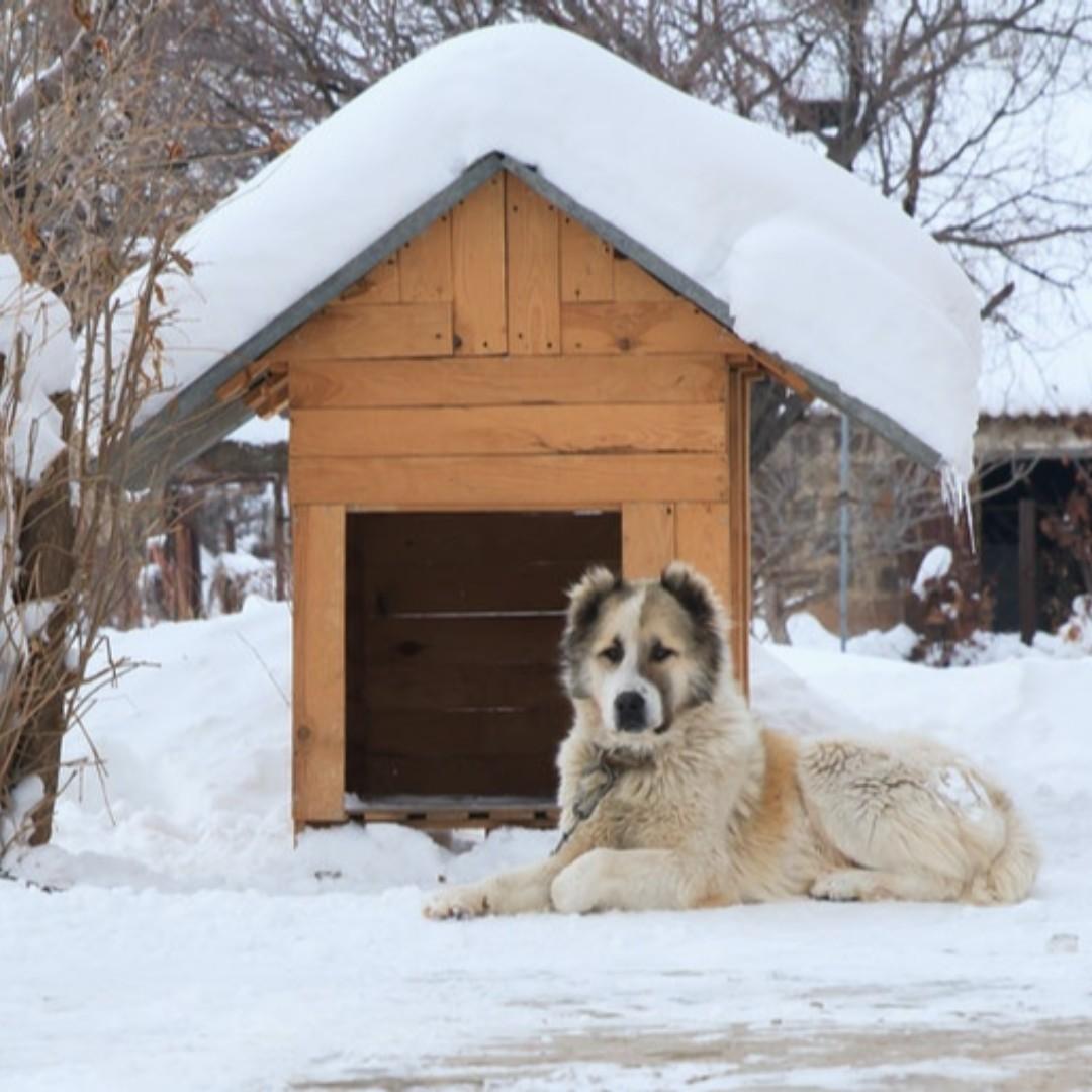 The 4 Best Dog Houses For Cold Weather    #cold #winter #read #news #dog #adoptdontbuy #chugdog #chug #chihuahua #pug #animal