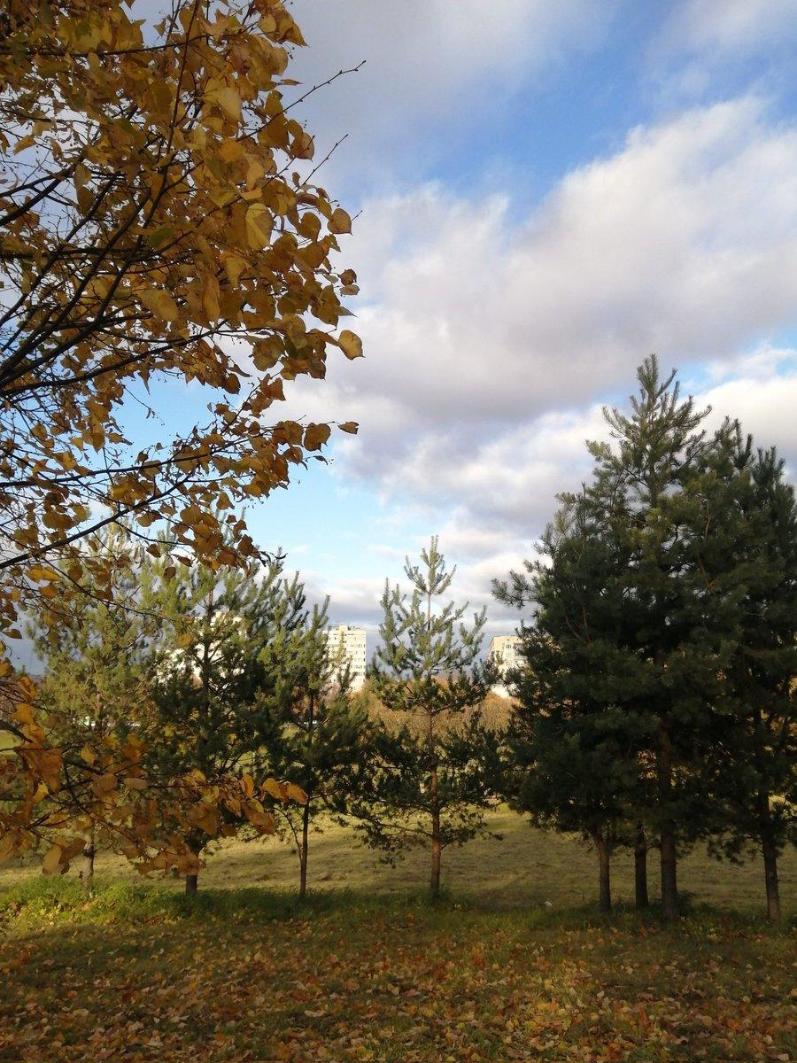 Beautiful nature    #Autumn #autumnlook #autumniscoming #autumncolors #landscapephoto #goodday #photography #dream #beautiful #beautifulview #beautifullife #beautifulday  #victoriaart9 #VictoriaArt #catsand1dog #paintingswoldartist #photosnature_victoria