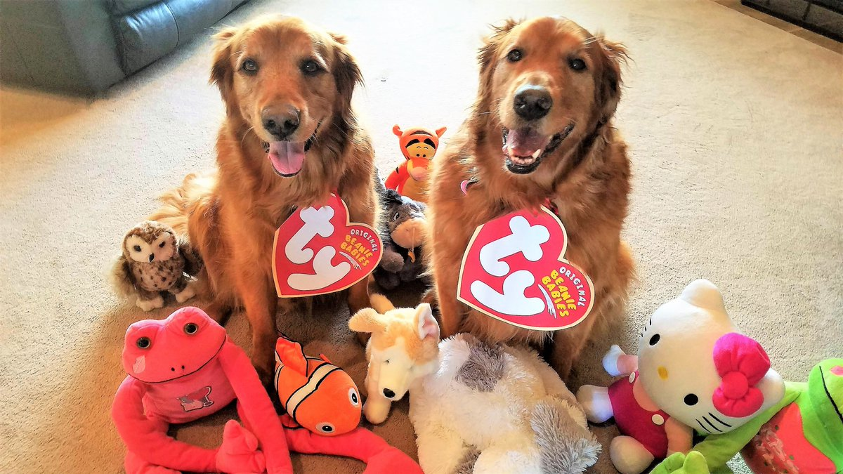 Pretending we were Ty babies several Halloweens ago.  But we are fuzzy, cute and soft, so we weren't really pretending at all!  #Marley #Sadie #Tybabies #dog #costume #halloweenfun #stuffeddogs