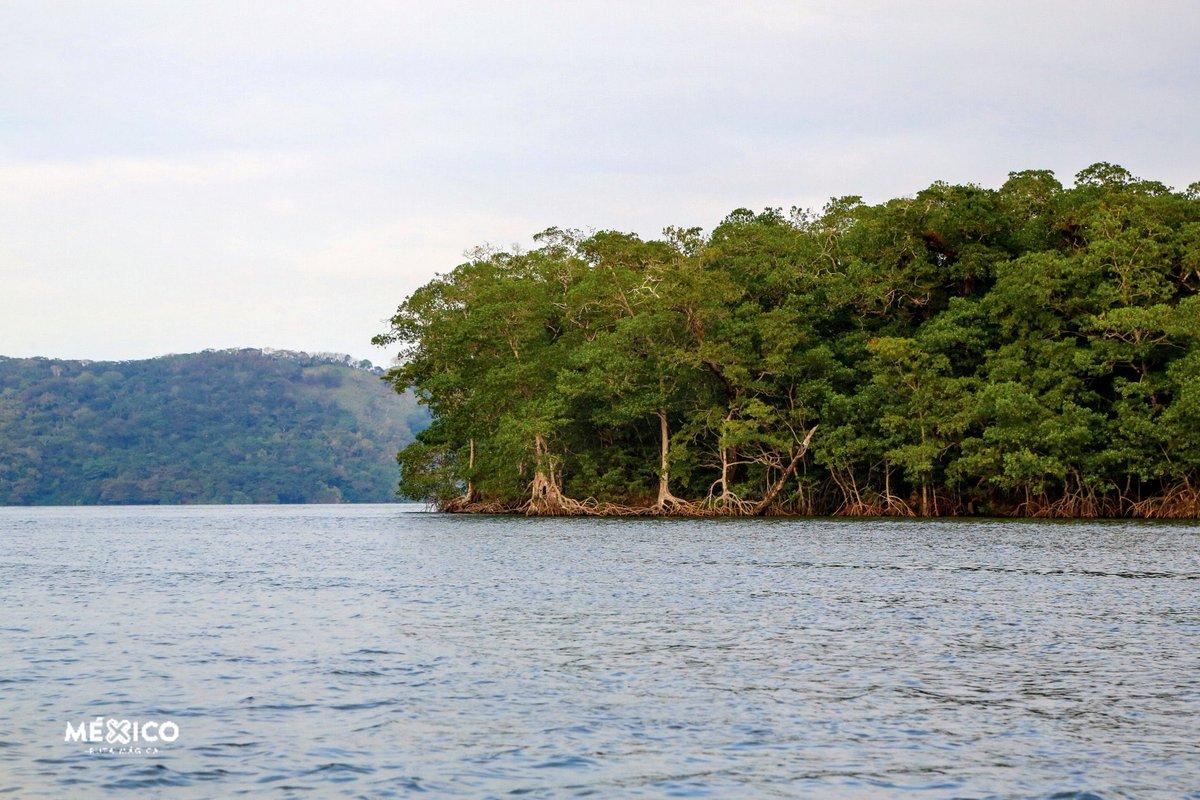 #BuenosDías  Desde la laguna de Sontecomapan💧en Catemaco, #Veracruz donde se encuentra uno de los manglares y humedales 🌳 más importantes del país  ¿Sabías que en #México 🇲🇽 hemos destruido la mitad de nuestros humedales? 😥 #turismo #MedioAmbiente #travel