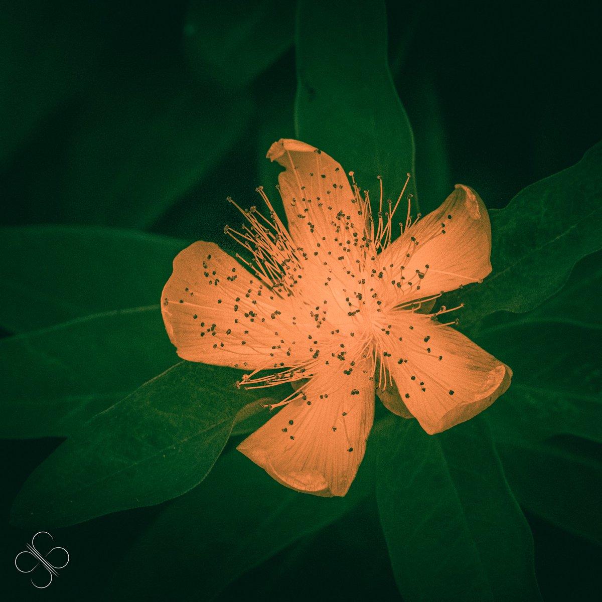 ----- Bien le bonjour. La nature est bien faite  Bien à vous.   ----- #SB #fleur #nature #jadin #auch #gers #occitanie #france #photo #photographe #photographie #canon #canonfrance -----