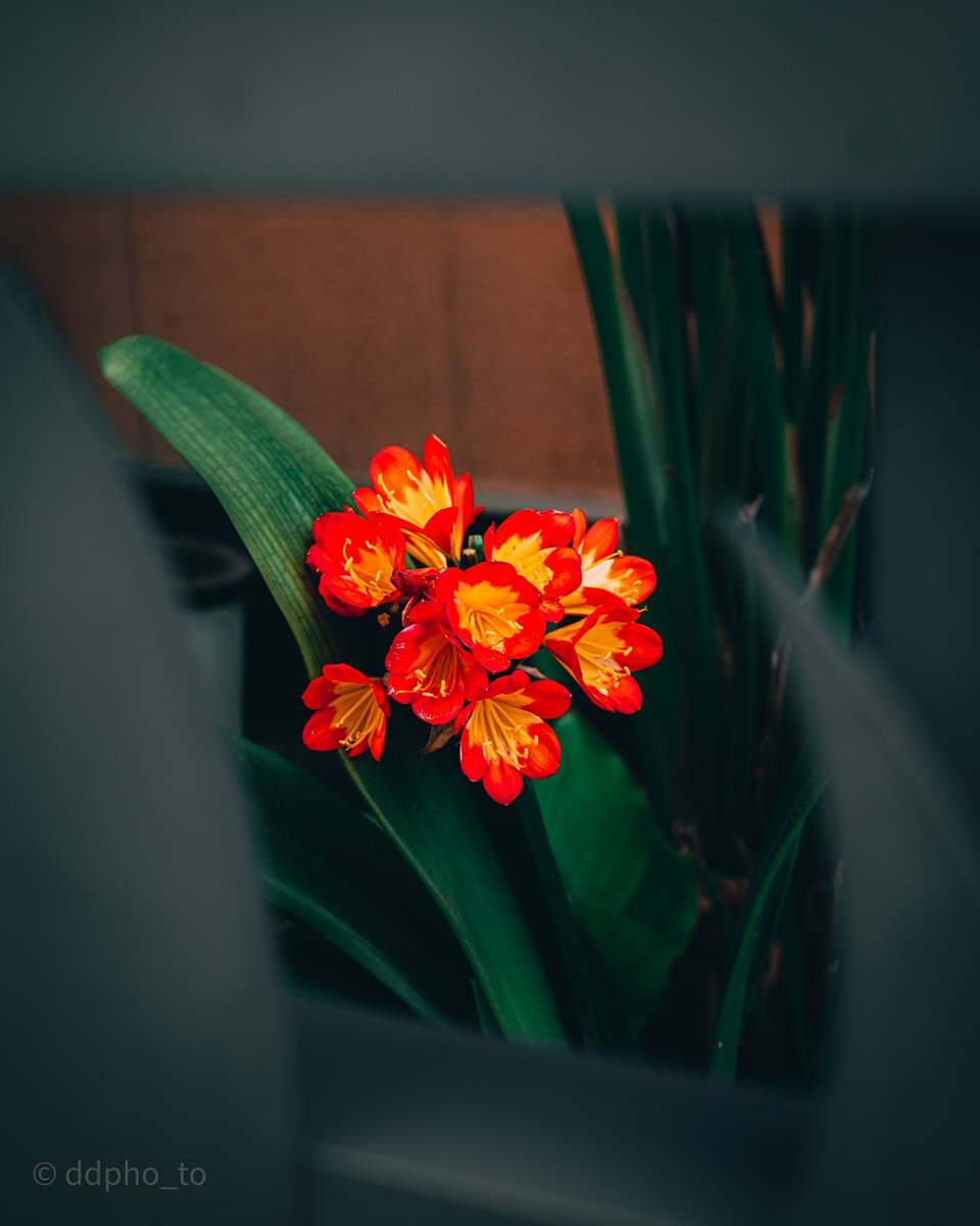 Some last minute golden hour hitting these flowers just making them look amazing 🌹  . . . . . #beautiful #photo #beauty #nature #happy #photography #art #picoftheday #flowers #photooftheday #cute #me #style #fashion #black #instagram #love #red #trending
