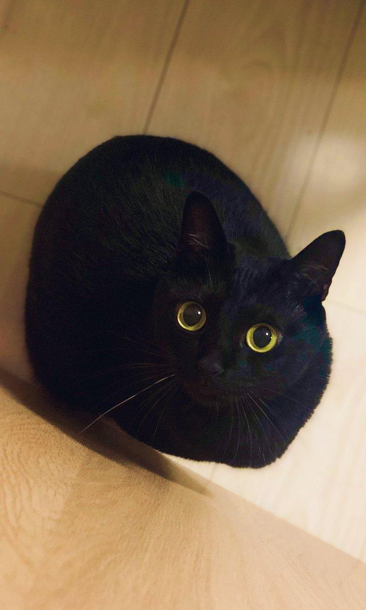 黒猫のこねろくさんの投稿画像