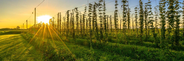 We invite you to experience farm life, farm food, & fabulous brew.