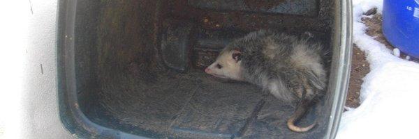 Possum Every Hour Profile Banner