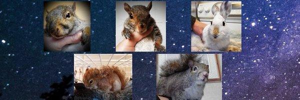 FourWands Wildlife Profile Banner