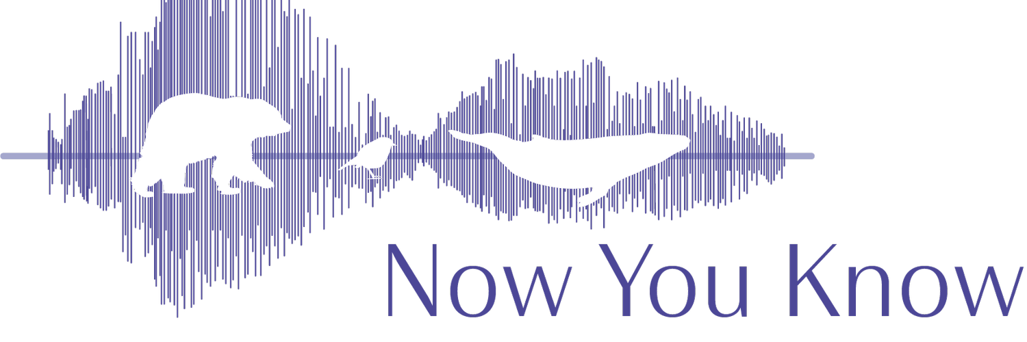 The Now You Know Podcast exposes animal welfare and environment issues to give you the tools to make real change happen.