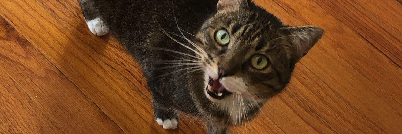 •@WJCTJax Special Projects Producer • Cats, plants & podcasts • Produces #OddBallPodcast & #WhatItsLikePodcast • @SPJFla BM • @SaltInstitute & @uofnorthflorida