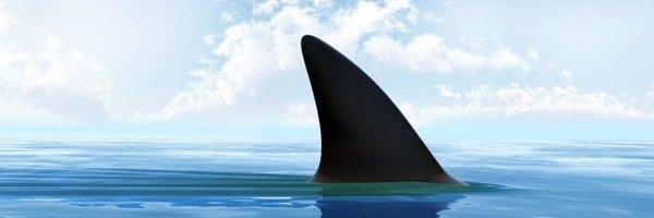 Shark Profile Banner