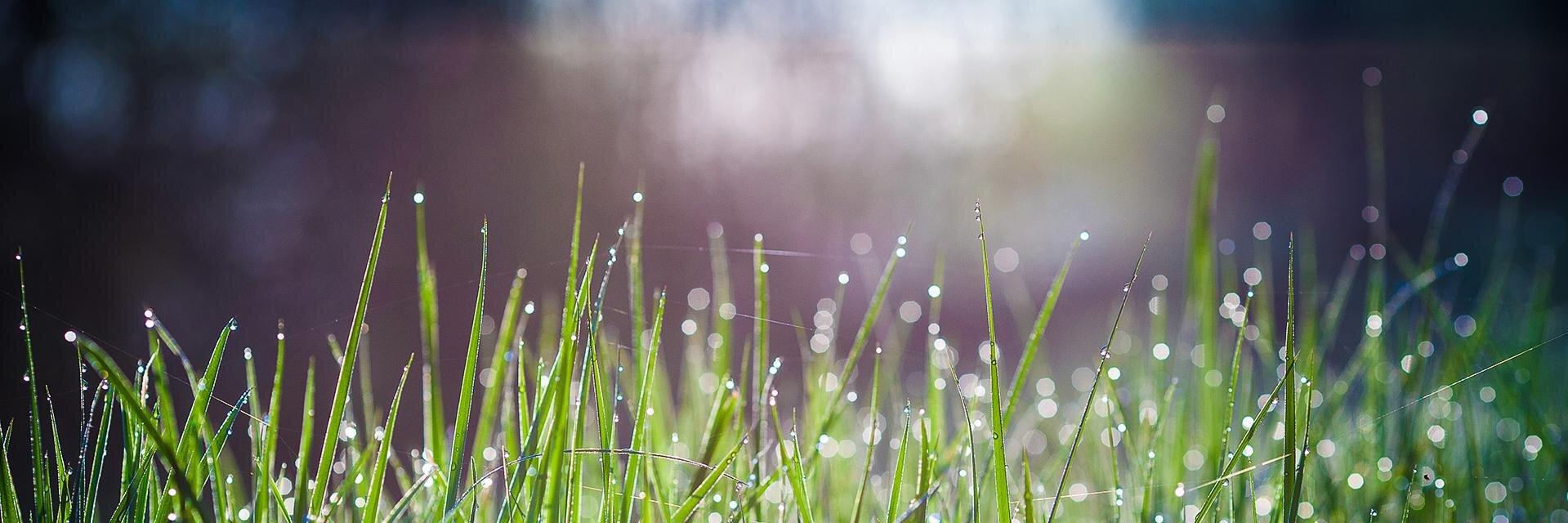 масла соль картинки на телефон лето дождь дерево плакучей