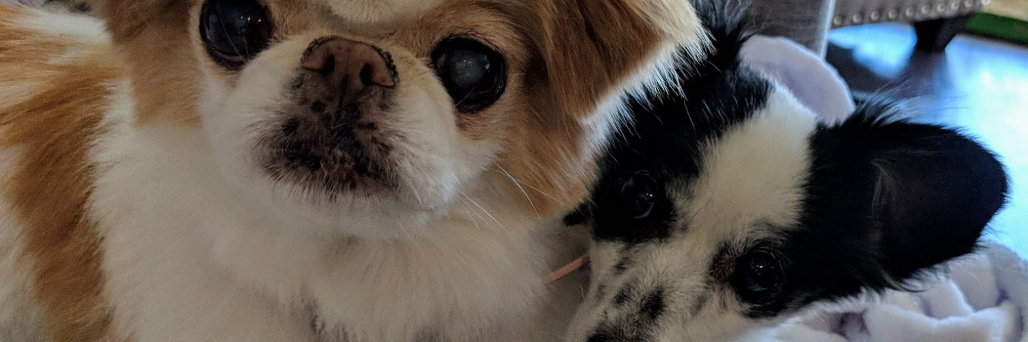 Pepper's Senior Dog Sanctuary provides a compassionate, loving and lifetime home that supports an elderly dog's good days, bad days and last days.