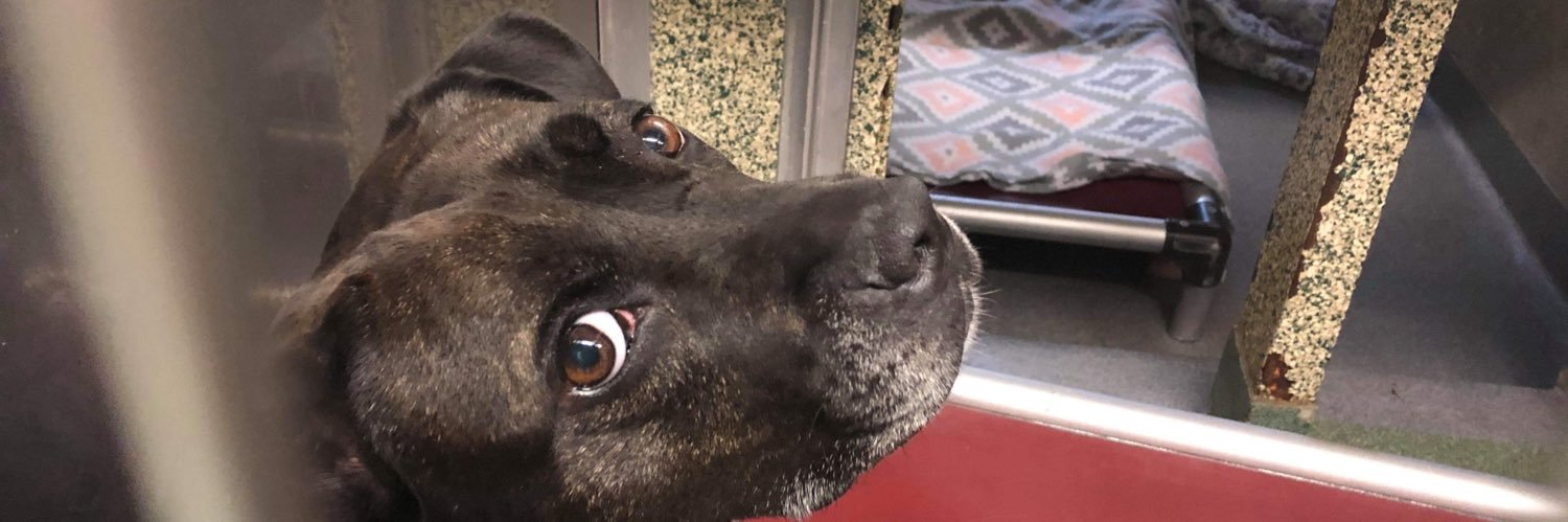 Hi! My name is Juniper. I came to the shelter as a stray in 2018 & nobody seems to want me, so I REALLY need your h… https://t.co/UeSX3Phv04