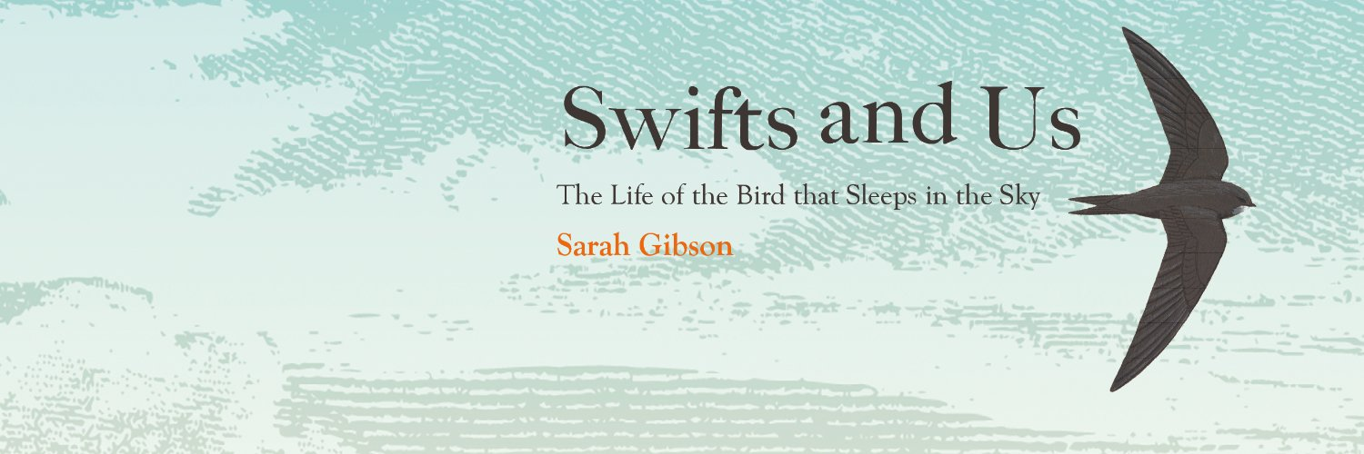 My book Swifts and Us: The Life of the Bird that Sleeps in the Sky, coming April 2021 @WmCollinsBooks. Working for @shropswildlife and wild times for nature.